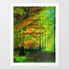 Sunlit trees Art Print