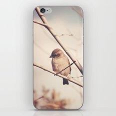 Little Sparrow iPhone & iPod Skin