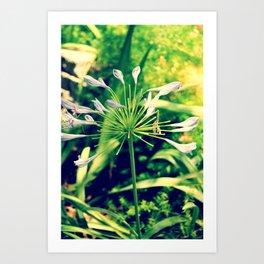littleflowers Art Print