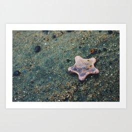 Lonely Star (Stewart Island, New Zealand) Art Print