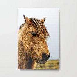 Horses Head Metal Print