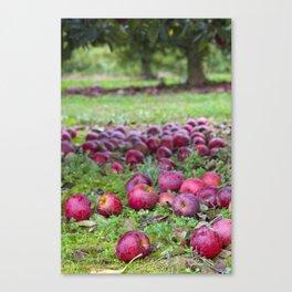Let's pick apples Canvas Print