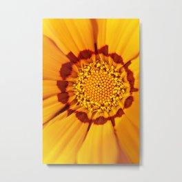 Orange Sun - gazania flower 3509 Metal Print