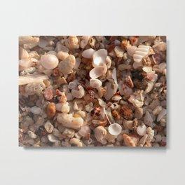 Beach shells Metal Print