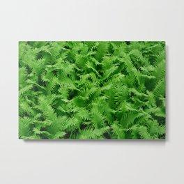 Green fern background Metal Print