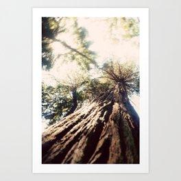 Too Tall Tree Art Print