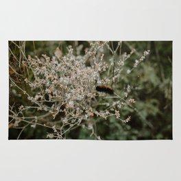 Wooly Bear Caterpillar on Plants - Big Bend Rug