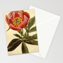 Flower paeonia officinalis sabini26 Stationery Cards