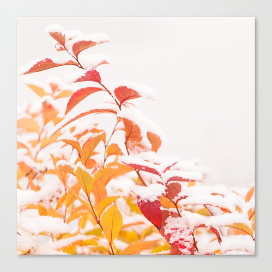 Snow covered red leaves Canvas Print