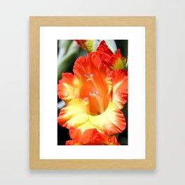 Orange Gladiola Framed Art Print
