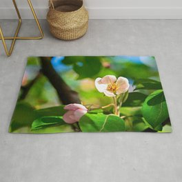 Pink crabapple flower, green leaves. Sunny day Rug