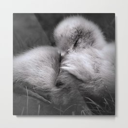 Not such an ugly duckling Metal Print
