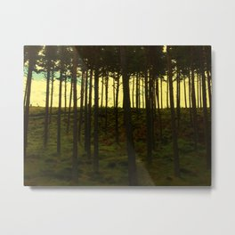 Scottish Pines Metal Print