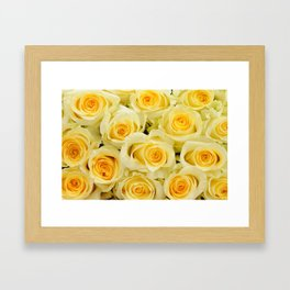 soft yellow roses close up Framed Art Print