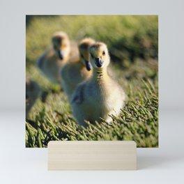 Goslings On The March   Bird   Babies   Canada Goose Mini Art Print