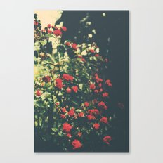Summer Roses Series  - I -   Canvas Print