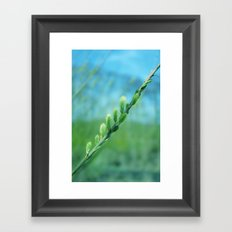 willow catkin Framed Art Print