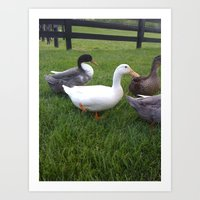 ducks Art Prints featuring Ducks by Yellow Barn Studio