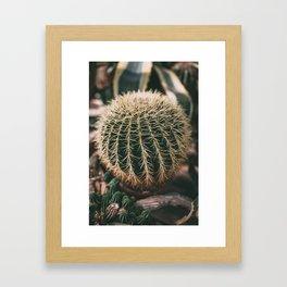 Cactus Love  Framed Art Print