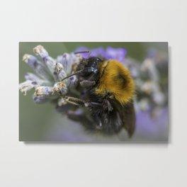 Bees Knees Metal Print