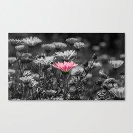 Dash of Pink Canvas Print