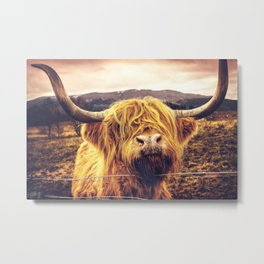 Highland Cow Nose Barbed Wire Fence Color Metal Print