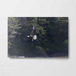 Eagle Fishing Metal Print