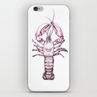 lobster iPhone & iPod Skins featuring Lobster by Kathryn Robertson