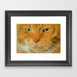 FELINE ORANGE Framed Art Print