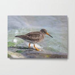 Sea Bird Metal Print