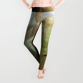 Chameleon: Fifty Shades of Green Leggings