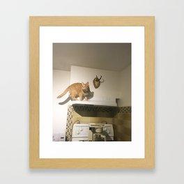 Scaredy Cat Framed Art Print