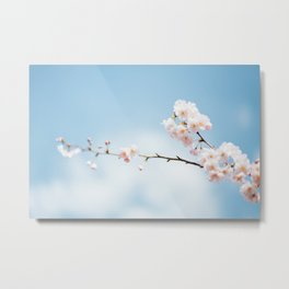 Cherry flower Metal Print