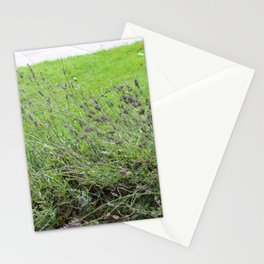 Lavender Flowers at Glamis Castle Stationery Cards