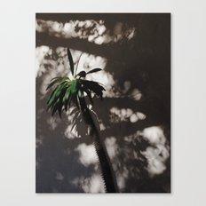 shadow palm Canvas Print