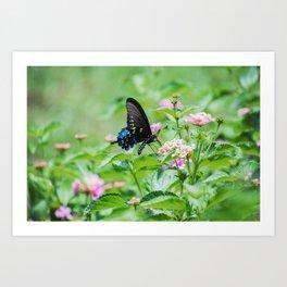 Summer Butterfly. Art Print