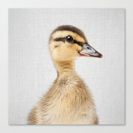 Duckling - Colorful Canvas Print