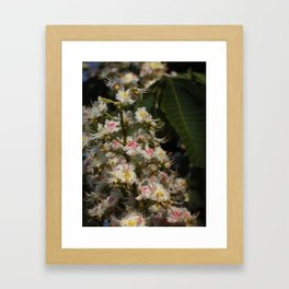 Pink and White Framed Art Print