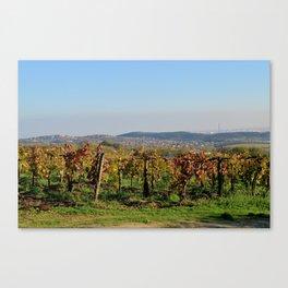 Grape-vine Canvas Print