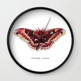Promethea Silkmoth (Callosamia promethea) Wall Clock
