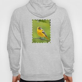 Baltimore Oriole Bird Hoody