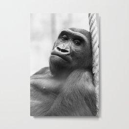 Wildlife Collection: Gorilla Metal Print