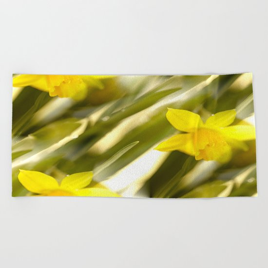 Spring atmosphere with yellow narcissus Beach Towel