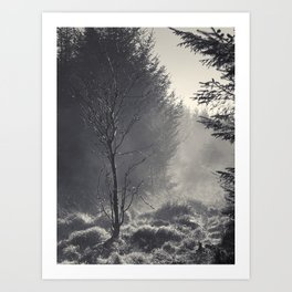 Mist rising at Wilsey Woods Art Print