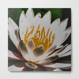 Aquatic royal flower Metal Print