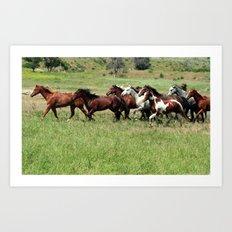 Mustangs on the Prairie Art Print