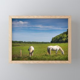 Horses grazing in Ireland Framed Mini Art Print