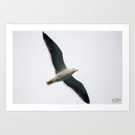 Simple Seagull Art Print