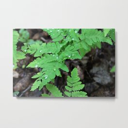 Northern Oak Ferns and Raindrops 2 Metal Print
