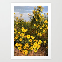 Marsh Wildflowers 5 Art Print